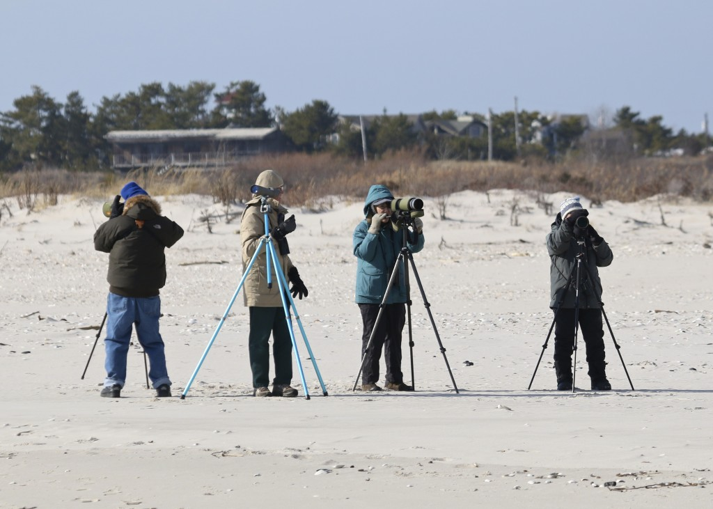 Dennis Murphy, Gene Tappan, Judy Cinquina, and Denise Farrell go to work atI can't get enough of these Long-tailed Ducks. Definitely the cutest duck out there. Barnegat Lighthouse State Park, 1/19/14.