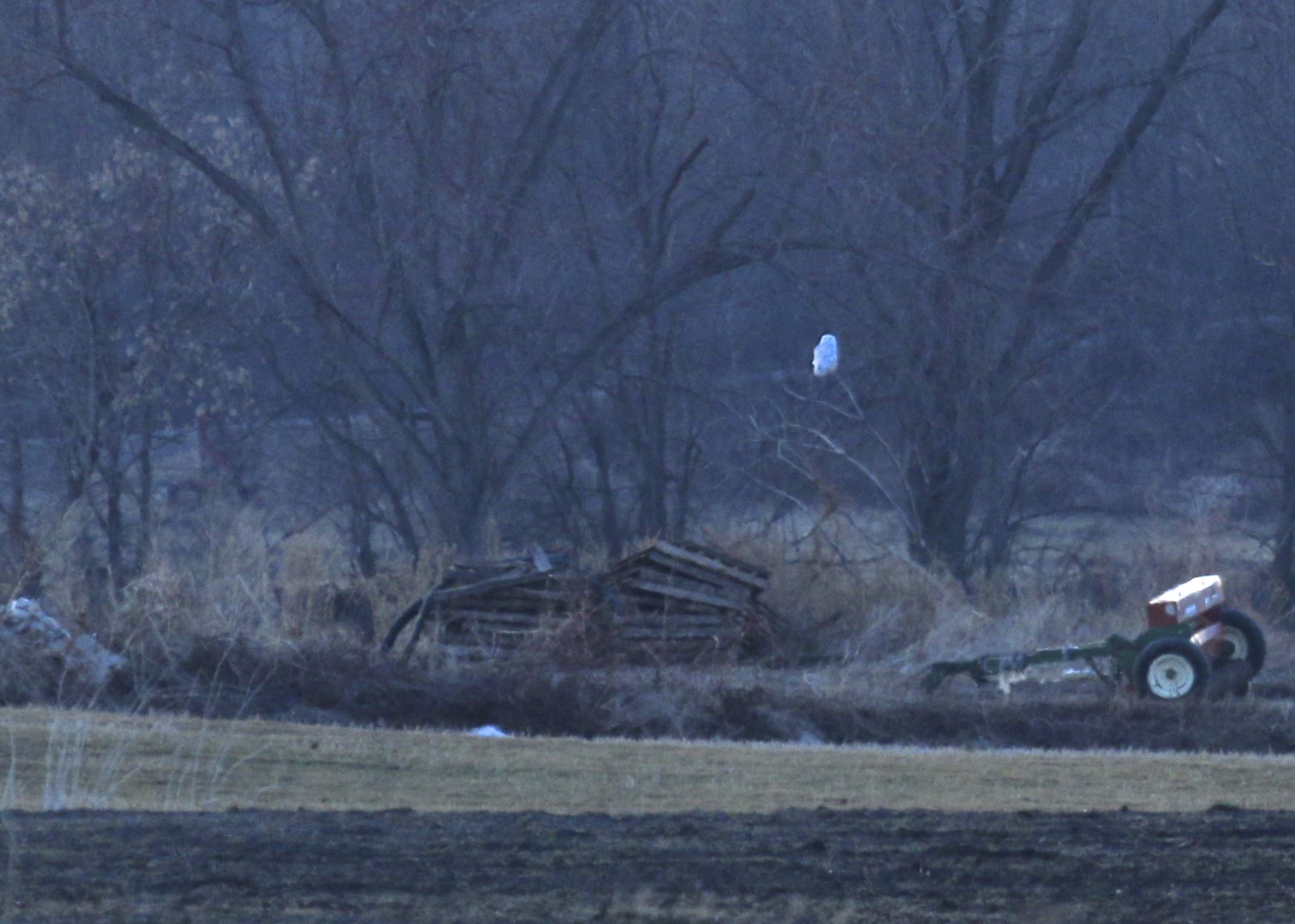 At least one Snowy Owl continued in the Black Dirt as of Friday night, 2/21/14.