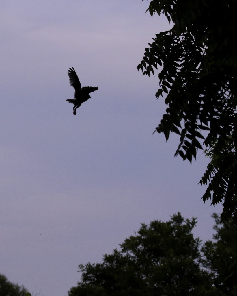 The EASO was out of the box before I knew it, but I did manage one silhouetted flight shot.